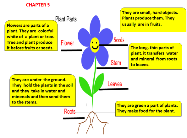 chapter5-plants