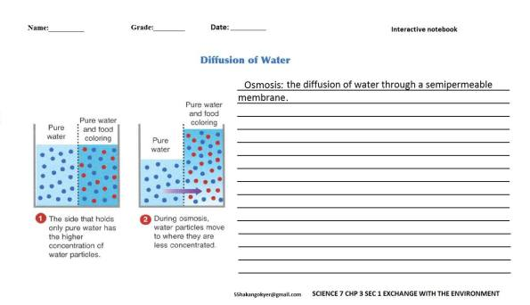 SCIENCE-7-CHP-3-1-diffusion of water