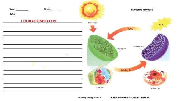 SCIENCE-7-CHP-3-2-cellular respiration